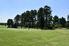 Giocatori di golf sul corso Fotografia Stock Libera da Diritti