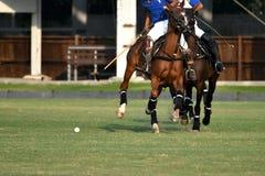 Giocatori di polo Fotografie Stock Libere da Diritti