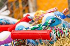 Giocattoli canini Fotografie Stock Libere da Diritti