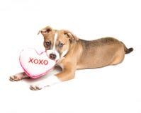 Amore di cucciolo Immagine Stock Libera da Diritti