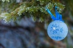 Giocattolo blu dell'pelliccia-albero su un ramo dell'abete blu blu, verde, bianco, abete rosso blu di Colorado, picea pungens cop Fotografia Stock
