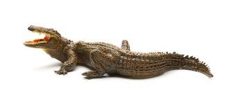 Giocattolo dell'alligatore di vista laterale su fondo bianco Fotografie Stock Libere da Diritti