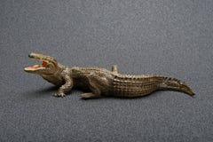 Giocattolo dell'alligatore di vista laterale su fondo scuro Immagine Stock