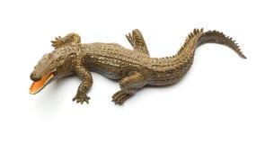 Giocattolo dell'alligatore di vista superiore su fondo bianco Immagini Stock Libere da Diritti