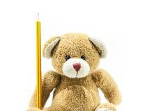 Giocattolo dell'orsacchiotto di Brown che si siede tenendo matita gialla sul fondo bianco Fotografia Stock