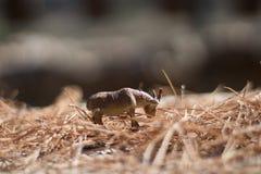giocattolo della capra che mangia erba fotografie stock