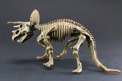 Giocattolo di modello di scheletro del dinosauro fossile del triceratopo immagini stock