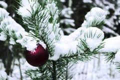 Giocattolo di Natale su un albero nevoso Fotografie Stock