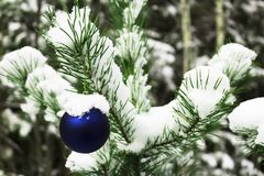 Giocattolo di Natale su un albero nevoso Fotografia Stock