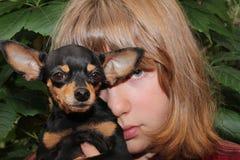 Giocattolo-terrier russo con il suo proprietario Fotografie Stock