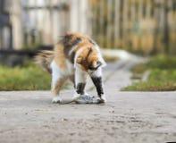 Giochi abili e fermi del bello gatto lanuginoso un topo grigio in Th Fotografia Stock