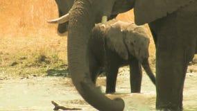 Giochi del bambino dell'elefante africano nell'acqua archivi video
