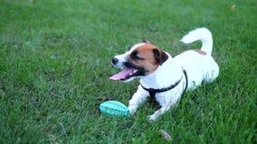 Giochi del cane nell'erba stock footage