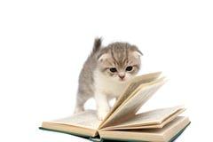 Giochi del gattino con il libro Fotografie Stock
