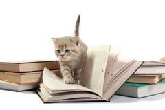 Giochi del gattino con il libro Fotografia Stock Libera da Diritti