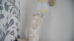giochi del gattino con le lampade di pendenti di cristallo video d archivio