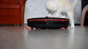 Giochi del gattino con un aspirapolvere del robot