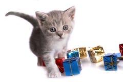Giochi del gattino su una priorità bassa bianca Immagine Stock