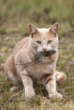 Giochi del mouse e del gatto immagine stock
