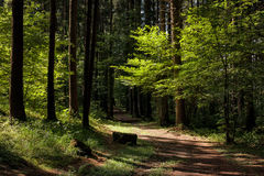Giochi di luce nella foresta Fotografia Stock