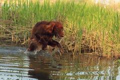 Giochi felici del cane sulla banca di fiume fotografia stock
