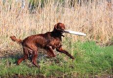Giochi felici del cane sulla banca di fiume fotografia stock libera da diritti