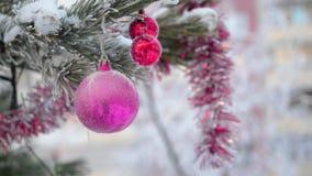 Giochi la palla che appende sul ramo attillato nell'inverno all'aperto archivi video