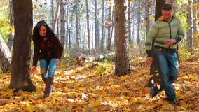 Giochi le foglie nel movimento lento della foresta di autunno stock footage