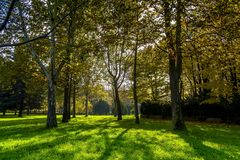 Giochi leggeri fra gli alberi a Torino Piemonte, Italia fotografia stock