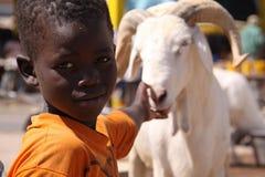 Giochi senegalesi del ragazzo con le pecore sacrificali immagine stock libera da diritti