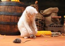 Gioco bianco del gatto Immagini Stock