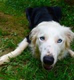 Gioco in bianco e nero del cane Immagine Stock