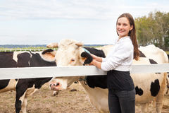 Gioco con gli animali, amicizia con la mucca Bestiame facente una pausa sorridente della donna dell'agricoltore fuori Fotografie Stock