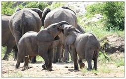 Gioco degli elefanti del bambino immagine stock