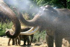 Gioco degli elefanti in estate Fotografie Stock Libere da Diritti
