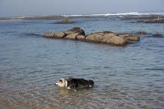 Gioco dei cani fotografia stock