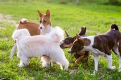 Gioco dei cani Fotografie Stock