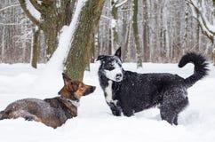 Gioco dei cani a vicenda immagini stock