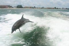Gioco dei delfini Immagine Stock