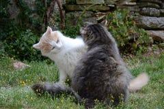 Gioco dei gatti nel giardino Immagine Stock Libera da Diritti