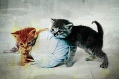Gioco dei gattini Immagini Stock Libere da Diritti