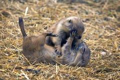 Gioco dei lemming Immagini Stock