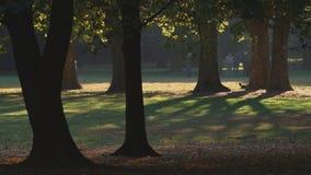 Gioco del boccia in un parco della città di autunno stock footage