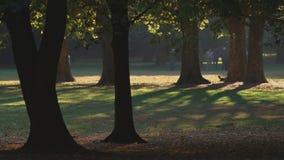 Gioco del boccia in un parco della città di autunno video d archivio