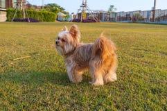 Gioco del cane nel cortile Fotografia Stock Libera da Diritti