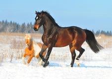 Gioco del cavallino e del cavallo insieme Fotografie Stock Libere da Diritti
