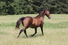 Gioco del cavallo Fotografia Stock