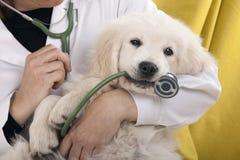 Gioco del cucciolo Immagine Stock Libera da Diritti