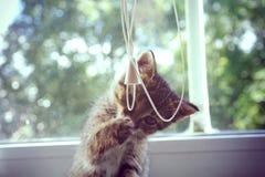 Gioco del gattino Fotografie Stock Libere da Diritti