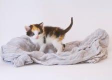 Gioco del gattino Fotografie Stock